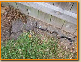 How Hot Summer Weather Can Damage Foundations. Watering Helps.