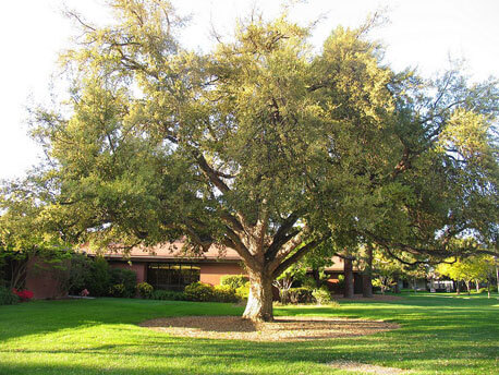Choosing A Tree That Will Not Cause Foundation Problems