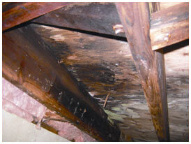 Crawl space foundation problems Dallas, Fort Worth TX