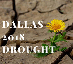 HD Foundations in the News – Dallas 2018 Drought